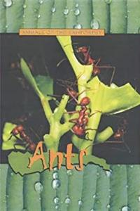 Ants (Animals of the Rainforest) e-book